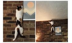кошка наловчилась карабкаться отвесной стене видео