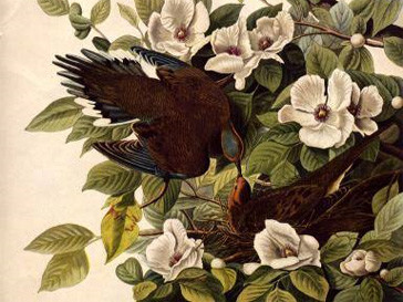 аукцион, рекорд, Птицы Америки