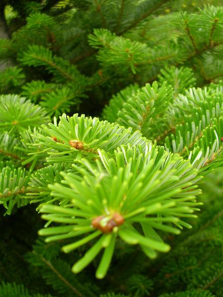 К чему снится елки сажать 34
