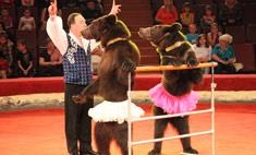 В Воронеже выступят медведи-гиганты