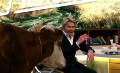 Басков подоил козу, чтобы доказать, что он «из народа»