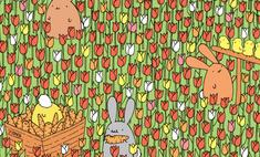 Загадка, над которой придется неслабо побиться: где яйцо?