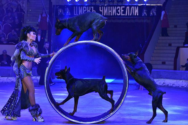 Воронежцы первыми увидят программу «Легенды цирка», подготовленную Олегом Поповым.