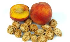 Масло персиковых косточек для лица – рецепты и советы