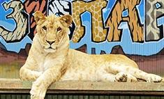 Топ-10 звериных историй к юбилею зоопарка