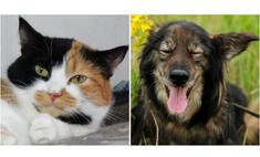 котопёс недели пёс шеги кошка олли