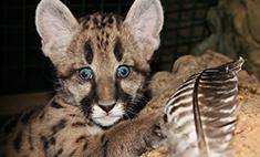 Топ-35 необычных питомцев зоопарка Самары