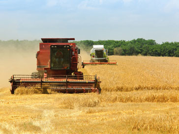 Комбайн, собирающий урожай