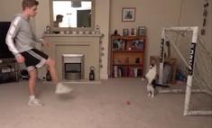 Видео с котом-вратарем, не пропускающим ни одного мяча, набрало 11 миллионов просмотров