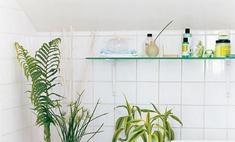 Как очистить комнату с помощью растений