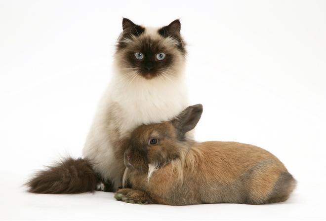 маленькая порода кошек
