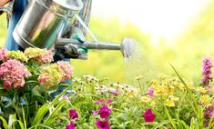 Садоводам-огородникам: сеем по лунному календарю