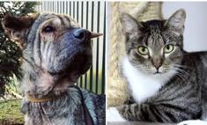 котопёс недели возьми приюта собаку бьюти кота уильяма