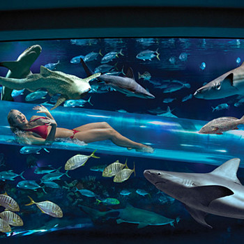 Отель Golden Nugget (США). Бассейн, в котором можно поплавать вместе с пятью видами акул, а также скатами, находится в Лас-Вегасе. Не бойтесь: от зубастых созданий вас оградит толстая стеклянная труба, по которой вы промчитесь прямо внутри океанариума. Впрочем, можно выбрать и другие развлечения - трехэтажные горки, водопады, и небольшой кусочек обычного бассейна.