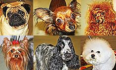 Самые хорошенькие ручные собачки Казани