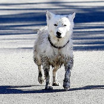 Где в солнечный погожий день пес нашел столько грязи?
