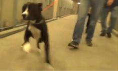 Реакция пса Бенни, который только что узнал, что его забирают из приюта домой (видео)