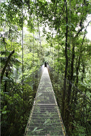 В Коста-Рике можно увидеть невероятное количество удивительных и жутковатых мостов. Все они обычно очень длинные и расположенные на большой высоте, чтобы облегчать путь через дождевые леса.