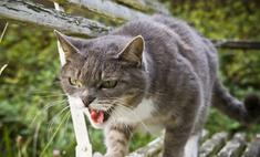 Почтальоны отказались носить почту из-за злого кота