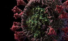 подробная красивая 3d-модель коронавируса видео