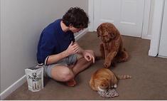 Парень показал, как он научил учит свою собаку гладить своего кота (видео)