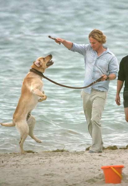 Голливудский актер Оуэн Уилсон играет на пляже со своим лабрадором