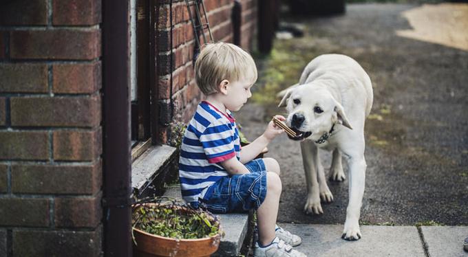 «Он просит купить собаку»