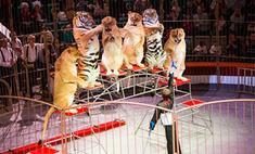 В воронежском цирке поселились львицы