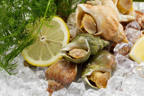 Брюхоногий моллюск трубач: как готовить?