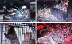 сети появились фото видео самого рынка ухане возможно
