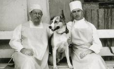 Пес отказывался кусаться и есть колбасу: как снимали «Собачье сердце»