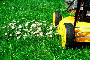 Как сделать красивый газон