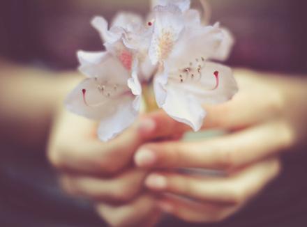 Руки, держащие цветок