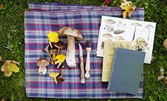 Как найти съедобные грибы и другие правила тихой охоты