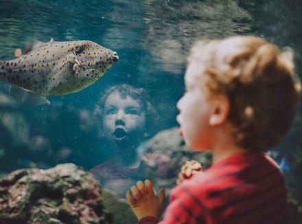 Мальчик у аквариума
