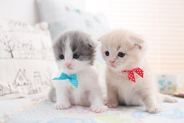 смешные кошки конкурс кошек