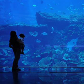 В Dubai Mall есть огромный аквариум размером с трехэтажный дом, где обитают около 40 тысяч жителей подводного мира.