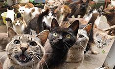 17 котиков были замурованы в подвале Большого Гостиного Двора