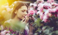 Инструкция: как вырастить розу на даче