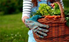 Инструкция: как защитить растения от болезней