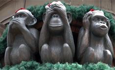 Самые необычные памятники обезьянам