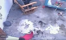 В Колумбии суперкот спас ребенка от падения с высокой лестницы (видео)