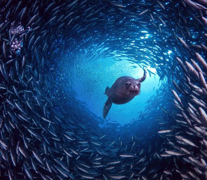 ELLE Inspiration: самые красивые подводные фото