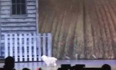 Собачка, игравшая Тотошку в спектакле, потешно упала со сцены (видео)