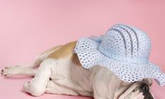 В Великобритании прошла выставка собак Crufts Dog Show