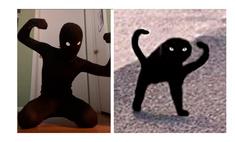 смешной флешмоб воссоздают видео культовые мемы котами
