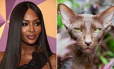 Люди как животные: на какие породы кошек похожи звезды