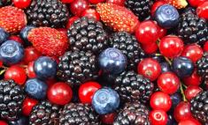 Способы сушки ягод и фруктов