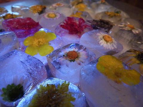 лед из ромашки