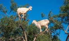 удивительных загадок мира животных
